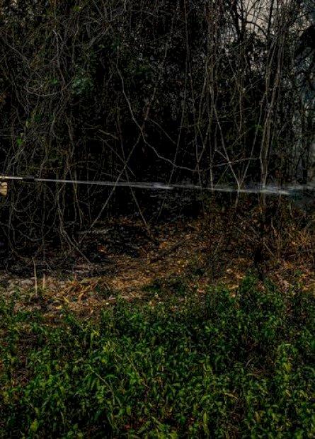 DF, SC e Ibama vão reforçar operação contra incêndios no Pantanal